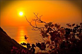 sunset_flowers_by_maya_bella-d392xmn